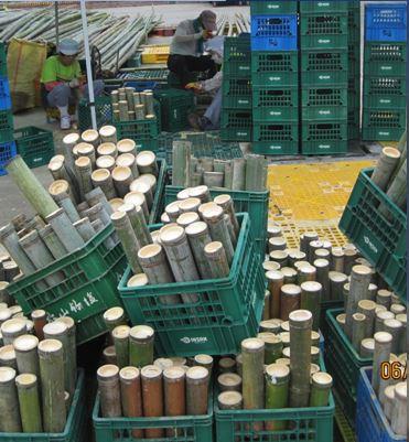 Vysušená sůl vložená do bambusu